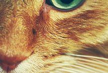 Gatos bonitos