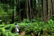 To Do in the Redwoods