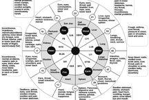 12 myofascial meridians