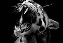 Smukke dyr
