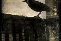 Raven...Raben...