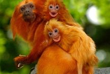 Primates / by malea neese