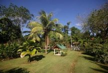 Great Deal Lot, House, Livestock Grazing, Farm and Canopy All in One Property / https://www.dominicalrealty.com/property/23/