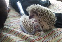 Hedgies, <3  / by Olivia Quinn
