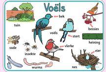 Grade 2 - Birds