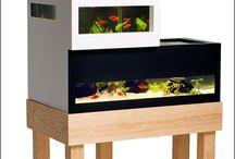 Unique aquariums