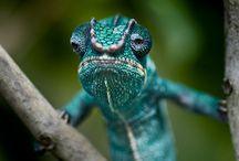 colorful animals world