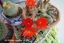 MY LITTLE GARDEN / è il mio piccolo giardino...adoro le piante cactacee e grasse forse perche sembrano difficili... spinose...ma  poi... se sai aspettare e le coltivi  con pazienza e amore  ti sorprendono, regalandoti  la sorpresa di avere fiori bellissimi che a volte durano solo un giorno