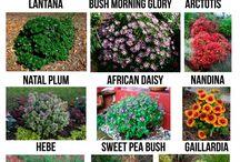 záhradka