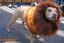 Funny Animals / by Longwood Vet Clinic