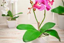 Decorative Plants / 0