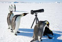 Curious animals!
