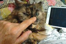 Instagram https://www.instagram.com/p/BOuqMFIBoqU/ January 01, 2017 at 11:49AM #jade #cats #kittycat