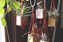 House Plants / by Lydia Billman