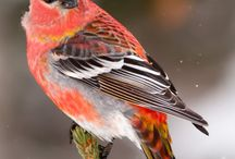Latino Outdoors - Birds