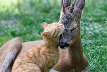 Beautiful #Animals / Photos of beautiful animals to lift your spirit