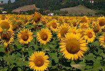 Tuscany Nature and Sceneries