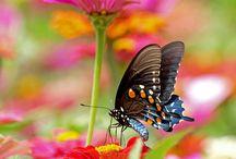 mariposas! tu visita!,,
