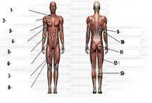 esp kiné sequence corps humain