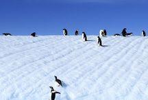 Travel - Antartica / Antarctica