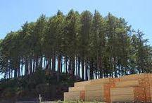 Evergreen Tree Uses