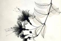 fiore gomito sx