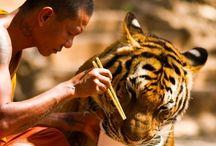 Buddhism-Hindu-Asia