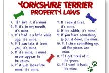 I'm a Yorkie dork!