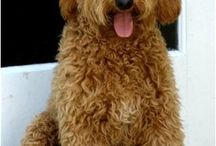 Possible dog to have