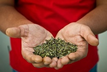 Darjeeling Tea Stories