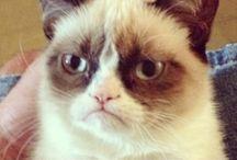 Grumpy Cat. My favourite.