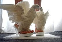 Crazy shoes / Wow.. These are amazing. WE don't know how practical, but never the less Interesting to check out!