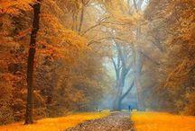 Paysage d'automne 1