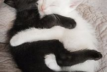Cats, cats, cats...