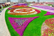 Miracle Garden In Dubai / Incredible garden with over 45 million flowers !!