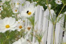 gardening / by Jo-Ann Pullen