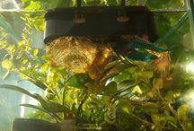 Aquarium Garden DIY Aquaponics Kit - Crowdfunding Launch $12