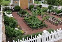 Flower Garden/ Vegetable Patch