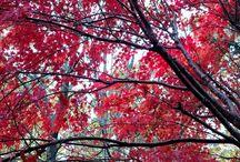 Fall Foliage at Shoji Spa & Lodge / Shoji Spa & Lodge in the fall. Asheville, NC.