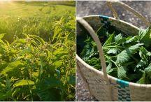 Herbs & Natural Needs