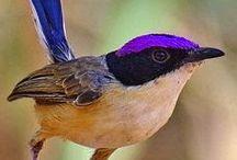 vtáky birds