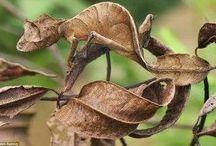 balhar d'aire, desparièr, acutorbatge / le mimétisme, ressemblant mais différent, camouflage
