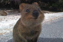 Cute Animals / by Katie Elizabeth