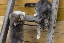 Crazy, Adorable Cats