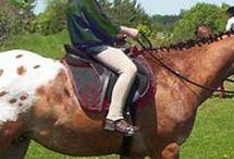 Horseback Freedom