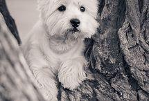 pieski/dogs / Też kochasz zwierzęta, tak jak ja ? To dobrze trafiłeś ,bo ta tablica  jest poswiecona naszym czworonożnym przyjacielom