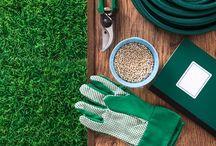 Plantar canela na horta