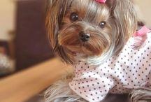Tessa's Haircuts