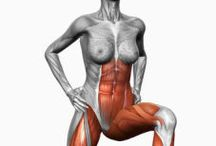 the muscles that we exercise
