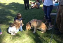 Puttin' On the Dog 2015 / The Adopt A Dog adoption event. October 20, 2015.